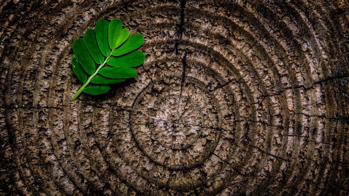Circular economy sustainability